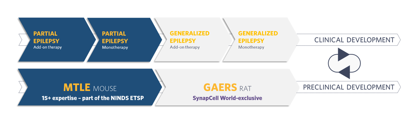 AED-CLINICAL-ROADMAP-SynapCell-In-vivo-efficacy-Testing-on-CNS-disorders