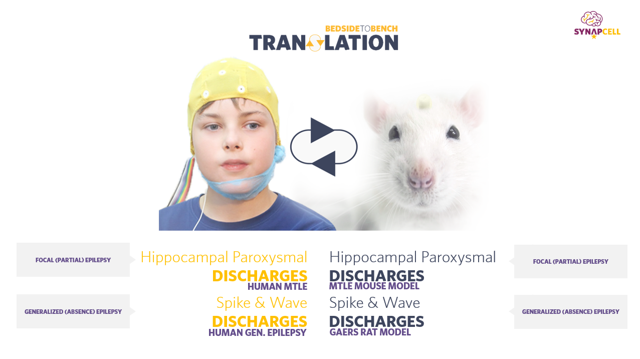 SynapCell-translational-EEG-biomarkers-epilepsy